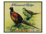 Pheasant Ridge Apple Crate Label - San Francisco  CA