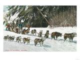 View of a Husky Dog-Sled Team - Alaska