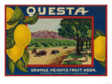 Questa Lemon Label - Corona  CA