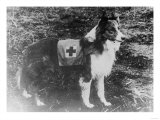 Red Cross Dog in Italy Photograph - Italy