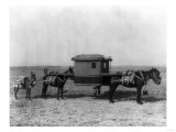 Sedan Chair Carried by Mules in China Photograph - China