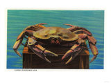 Dungeness Crab on Hood Canal - Hood Canal  WA