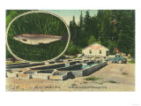 View of Trout Haven Hatchery - Gasquet  CA