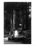 View of People Around Bonfire and Portrait - Bohemian Grove  CA
