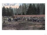 American Lake  Washington - A Mule Team at Camp Lewis