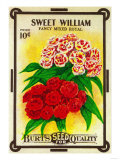 Sweet William Seed Packet