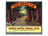 Yosemite Orange Label - Ivanhoe  CA