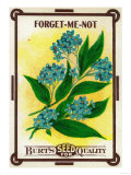 Forget Me Not Seed Packet