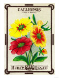 Calliopsis Seed Packet