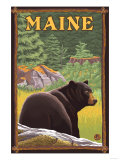 Maine - Black Bear in Forest