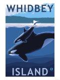 Whidbey Island  Washington - Orca and Calf