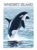 Whidbey Island  Washington - Orca Jumping
