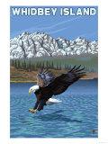 Whidbey Island  Washington - Eagle Fishing