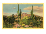 Camelback Mountain  Saguaros  Arizona