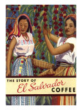 El Salvador Coffee  Pickers