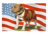 Marine Corp Boxer Dog with Flag