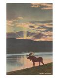 Elk at Sunset  Big Sky  Montana