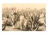 Natives on Maguey Plantation  Mexico