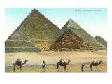 Giza Pyramids  Camels  Egypt