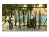 Hanging Fish  St Petersburg  Florida