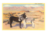 Desert Sweethearts  Nuzzling Burros