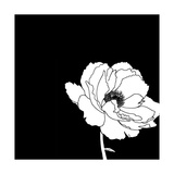 Black and White Print with Large White Flower