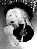 Entertainment Animal Dog February 1987 Dog Holding a Vinyl Record