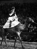 Prince of Wales Rides Camel at London Olympia in December 1979