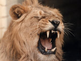 Lions  March 1992