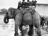 Children Ride on the Back of an Elephant at Belle Vue Manchester  May 1957