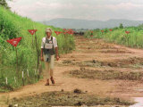Princess Diana in Minefield Outside Haunbo Angola Endorsing the Red Cross Campaign
