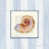 Sanibel Shell III