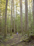 Woman Walks Through Second Growth Rainforest in British Columbia