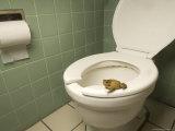 An Eastern American Toad in a Motel Room Bathroom
