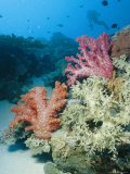 Close View of Soft Corals in a Reef