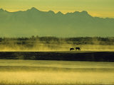 Horses Graze in Morning Mist on a River in the Darhad Valley