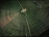 Sunlight Illuminates a Spider Web