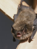 Close View of a Bat Hanging By Its Feet
