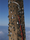 Coins Left Behind By Hikers are Embedded in a Shinto Shrine on Fuji
