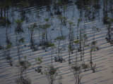 Waters of the Rio Negro Reflect Trees in Its Rippled Surface