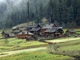 Kashmiri Village in Warwan Valley Beneath a Deodar Forest