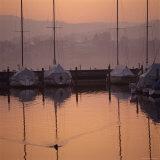 Duck Swims Near Anchored Sailboats at Sunrise
