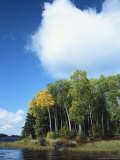 Cloud Rises Above Birch Trees on the Shore of a Manitoba Lake