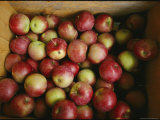 Apples in a Box  Vermont