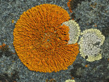 Colorful Lichen Spreads Across a Granite Rock