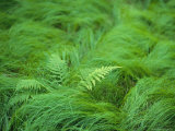 Close View of Swirling Green Grass and Fern Fronds