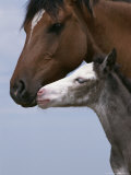 Spanish Mustang Mare with Foal
