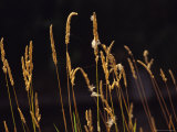 Warm Sunlight Highlights Tall Grasses