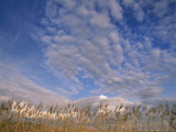 Blue Sky in Summer with Clouds Over Wheat Field