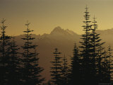 Tall Fir Trees are Silhouetted Against a Snowy Mountain Range